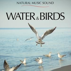 Water & Birds
