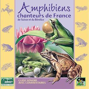 Amphibiens chanteurs