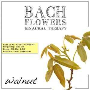 Walnut EFT Dose Therapy (Binaural Real Frequency from Bach Flowers)