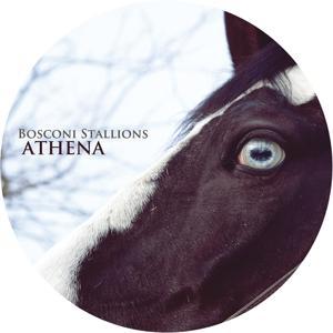 Bosconi Stallions - Athena