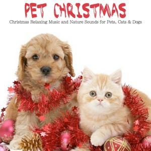 Pet Christmas (Christmas Relaxing Music and Nature Sounds for Pets, Cats & Dogs)