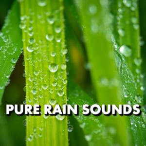 Pure Rain Sounds
